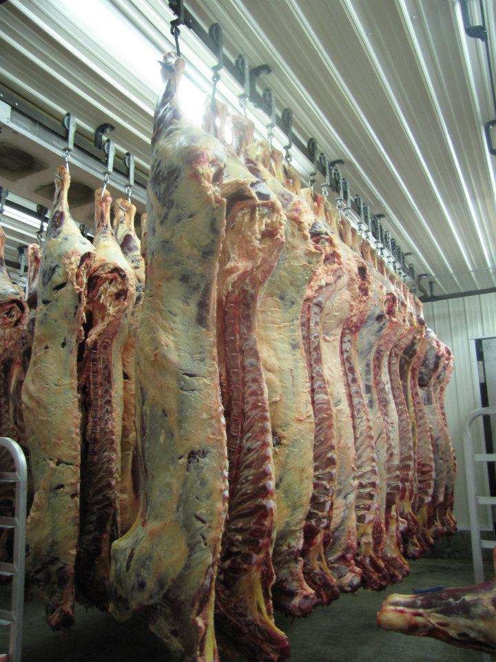 Beef-Processing-Image
