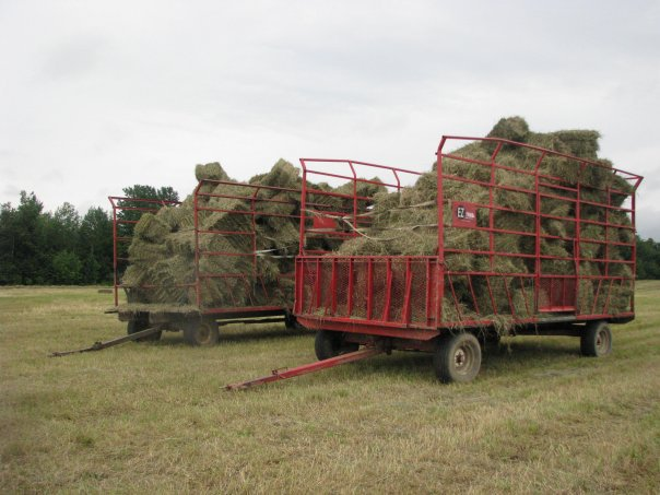 Hay and Silage 2